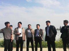 河南通许县竖岗镇大力发展特色农业 、走出脱贫致